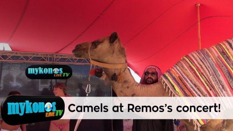 Μεχρι και καμηλες εφεραν για την συναυλια του Ρεμου με τους Ανατολιτες τραγουδιστες αποψε στο Nammos