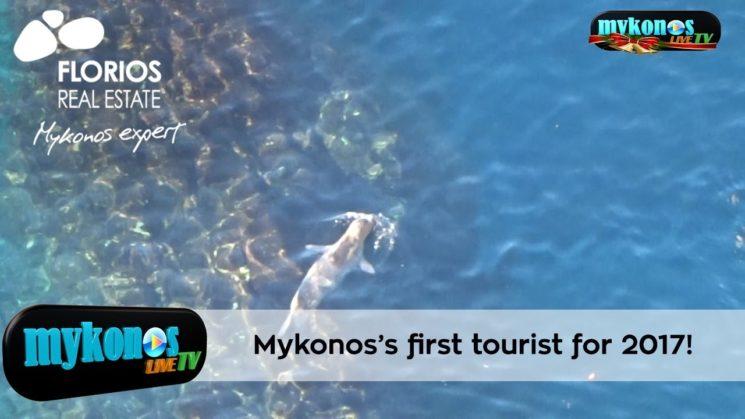 Δειτε την πρωτη τουριστρια της Μυκονου για το 2017